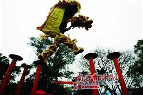 横江狮队的醒狮在高桩飞腾。