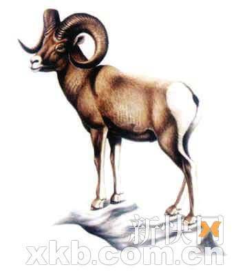 加拿大荒地盘羊、中国白?#25105;?#29492;、澳洲袋狼、旅鸽、欧洲野马、南?#21069;?#39540;、台湾云豹以及花袋鼠。