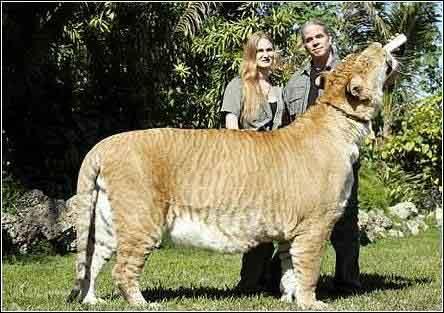 """""""赫拉克勒斯""""目前已经长到3.7米长,体重超过了500公斤"""