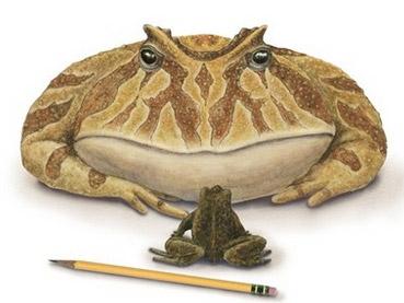 研究非洲巨型青蛙化石 发现其曾以小恐龙为食