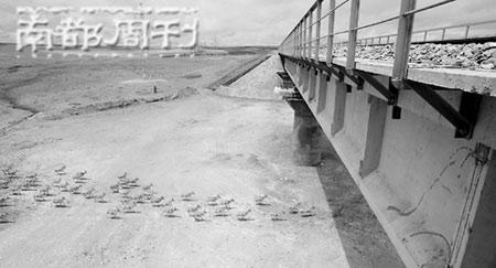 """郎树臣获得""""金镜头""""银奖的《藏羚羊穿越青藏铁路》。拍摄时,郎树臣与刘为强在同一现场,拍摄了同一羊群,拍照时间仅差一秒,却""""有羊没车"""" 郎树臣/图"""