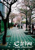 春游首尔八大看点(图)
