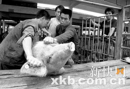 去年以来,市场上的猪肉价格节节攀升。王翔/摄(资料图片)