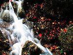 香山的小溪