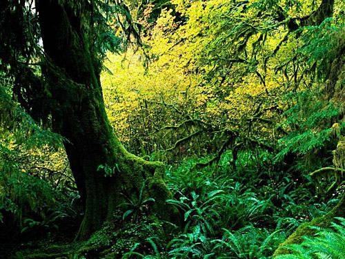 九寨沟·原始森林中的惊世美景[组图]
