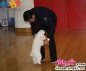 """图:《舞林大会2》徐根宝的特殊""""舞伴"""""""