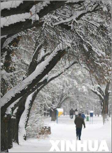 图文:阿拉木图行人走在被白雪覆盖的林荫路上