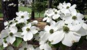 图文:2008美国大师赛将打响 奥古斯塔的鲜花