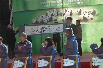 超可爱的大熊猫幼儿园入园仪式