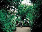 苏黎世动物园热带雨林温室