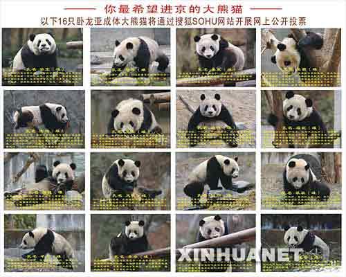 搜狐网承办熊猫征名活动