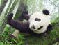 大熊猫官网