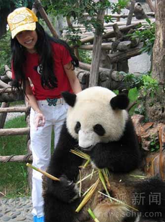 近距离一睹大熊猫吃竹笋的尊容