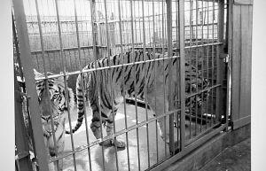 """据湖南省林业厅调查,平江""""华南虎""""是从石燕湖公园运去的。湖南省林业厅供图"""