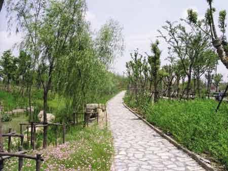 上海江湾湿地
