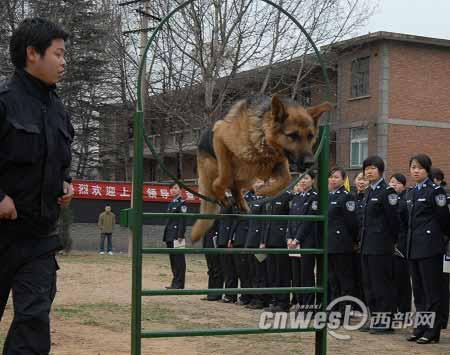 27名警花观摩搜爆犬训练(摄影/辛甜)