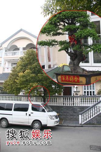 """王志文新房前的""""百年好合""""盆景"""