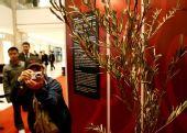 组图:北京奥运圣火橄榄枝与公众见面