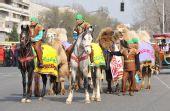 图文:阿拉木图民众迎圣火 骑着骏马牵着骆驼