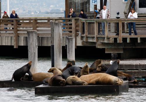 图文:旧金山风光  城市标志之渔人码头