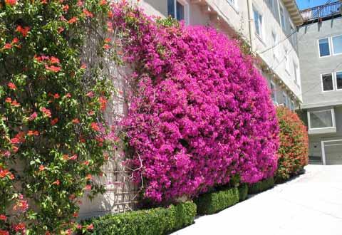 街道两旁也布满花卉