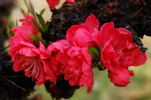 春风荡漾赏桃花:在桃花盛开的地方[图]