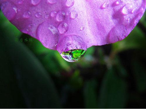 三月的小雨 遗留在花瓣上的水晶[组图]