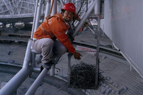 国家体育场(鸟巢)发现喜鹊搭建的铁制鸟巢