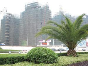 丽水城区到处可见在建楼盘