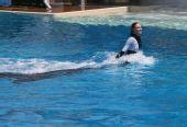 图文:国足畅游海洋公园 女海豚训练师