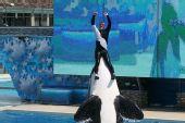 图文:国足畅游海洋公园 海豚托起训练师
