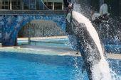图文:国足畅游海洋公园 海豚破水而出