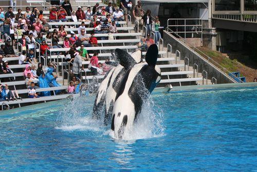 图文:国足畅游海洋公园 海豚精彩表演