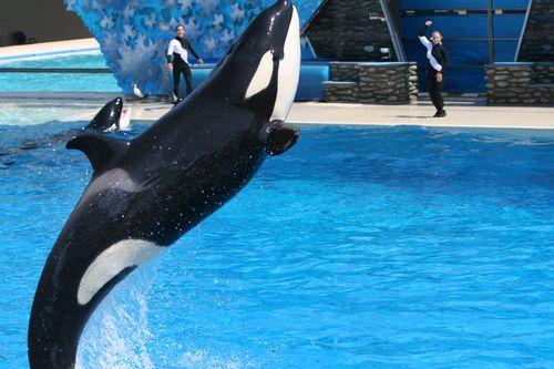 图文:国足畅游海洋公园 海豚跃出水面