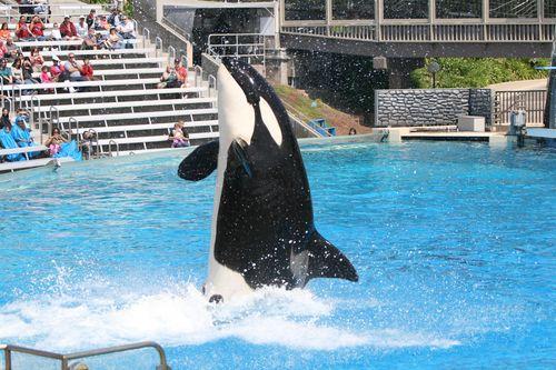 图文:国足畅游海洋公园 海豚跳着舞蹈