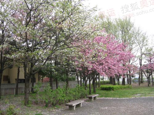 长野的樱花