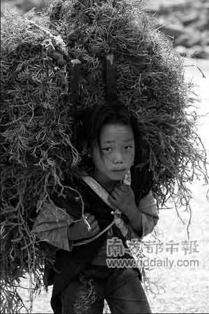 凉山的孩子早早挑起了家中重担。