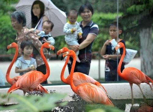 游客在广西南宁市南宁动物园观看火烈鸟(图)