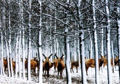 森林麋鹿手绘树