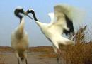 影像记录中国自然保护区五十年