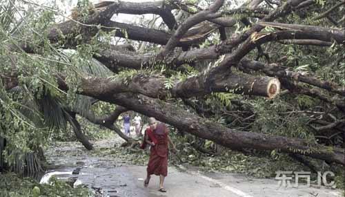 一位僧人从被折断的大树下走过。