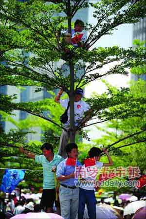 为观看火炬,一些市民爬上树枝。