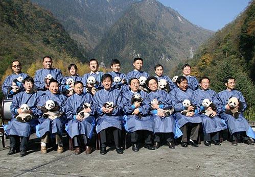 卧龙17只大熊猫宝宝合照全家福