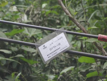 都江堰市区至青城山镇的电信沿途恢复的通信线路
