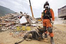韩国救援人员带著嗅探犬在四川什邡市蓥华镇一家工厂的废墟边工作。法新社