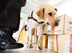 一只缉毒犬在机场执行任务。(资料图片)