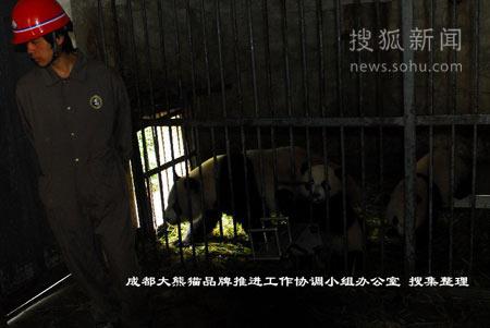 卧龙保护大熊猫研究中心兽舍