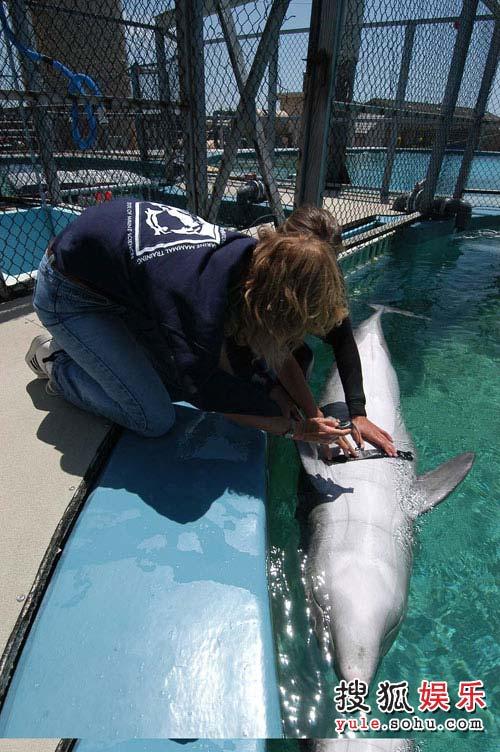 《海豚的人性》