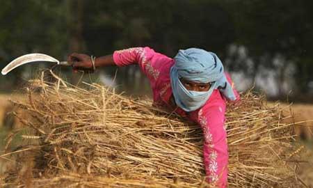 多方面因素造成世界粮食危机愈演愈烈