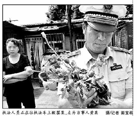 执法人员正在往执法车上搬罂粟,左为当事人黄某 摄/记者田宝希